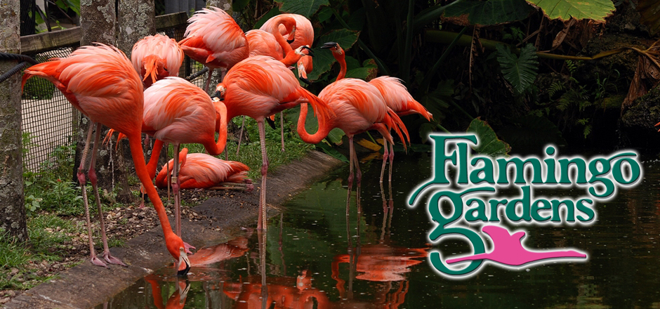 Top things to do in fort lauderdale florida for Flamingo gardens fort lauderdale