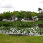 Air boats Florida's Everglades near Miami 8th Street