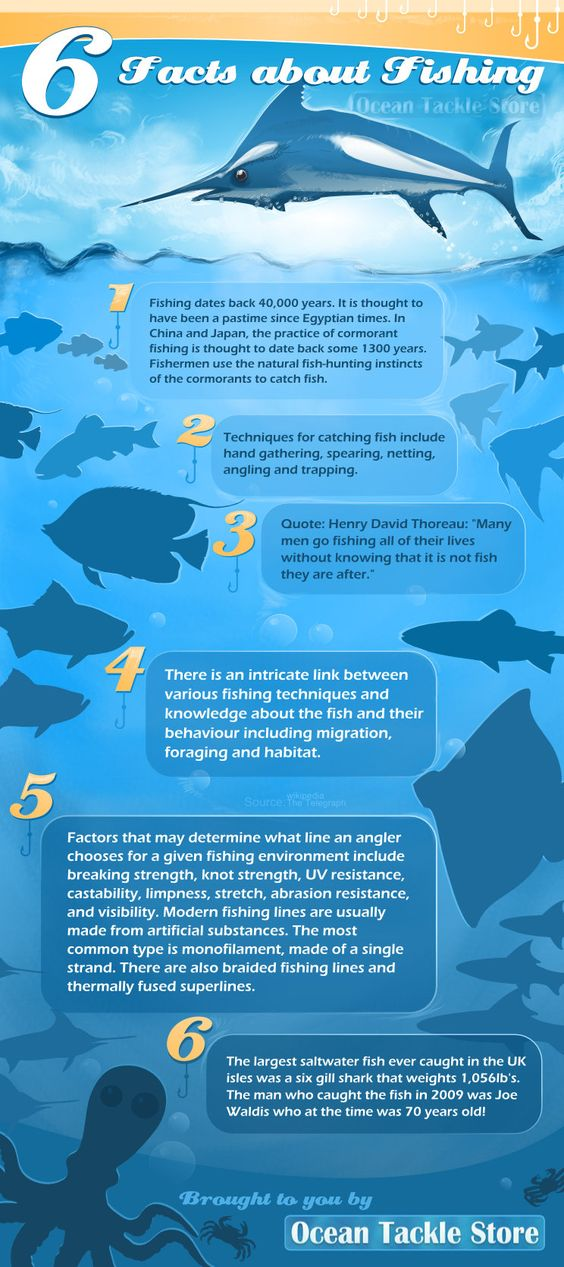 Next Vacation Infograph Yacht Cruise